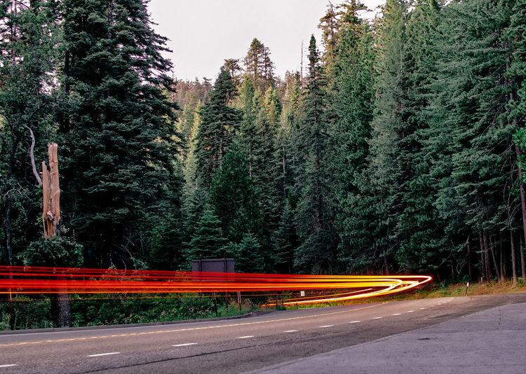 Light Trails On Street Along Trees