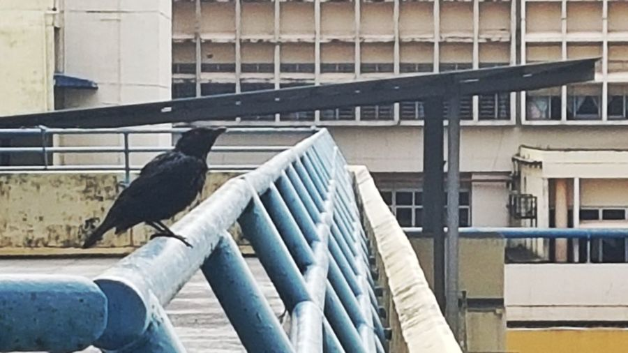 Close-up of bird perching on building