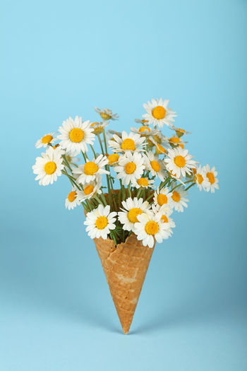 Close-up of daisies in ice cream cone against blue background