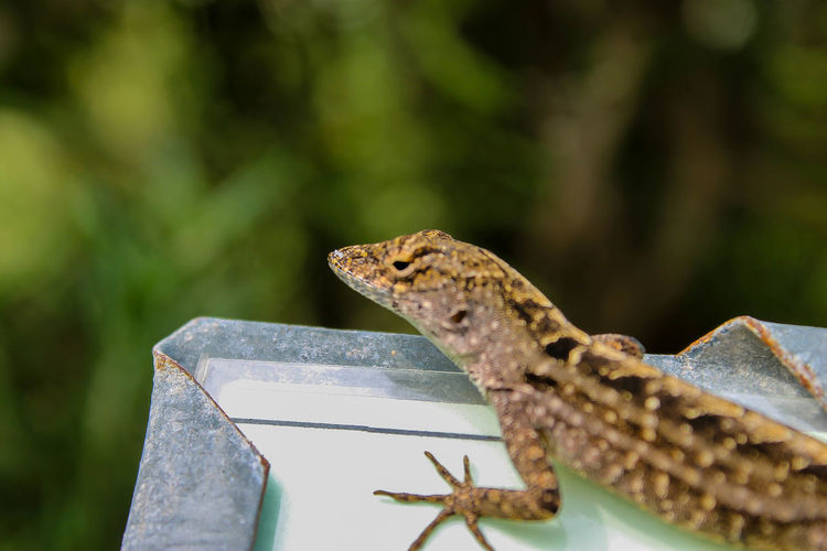 Close-up Day Focus On Foreground Lizard Nature No People Outdoors Part Of Selective Focus Eye Em Nature Lover