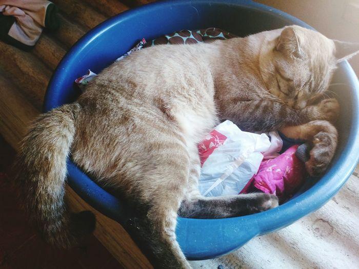 Gato Chico, dentro de uma bacia repleta de coisas que ele adora dormir dentro. EyeEm Selects Pets Domestic Animals Indoors  Mammal One Animal Animal Themes No People EyeEm Ready