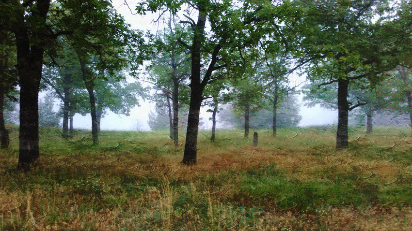 Tree Nature Fog 4am Non-urban Scene Tranquility Morning Outdoors No People Grass Beauty In Nature As If Oil Painting