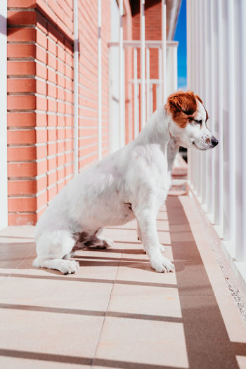 Side view of dog in balcony