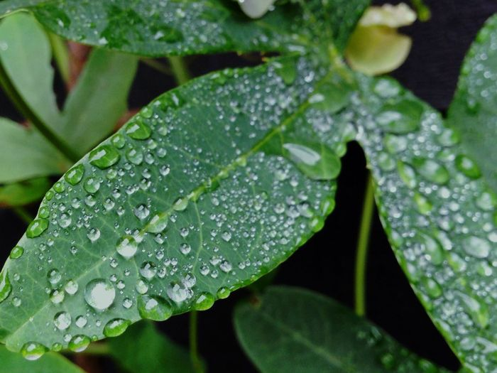 Drop Water Leaf Wet Close-up Plant Green Color Rain Nature Weather Leaves Beauty In Nature Nature