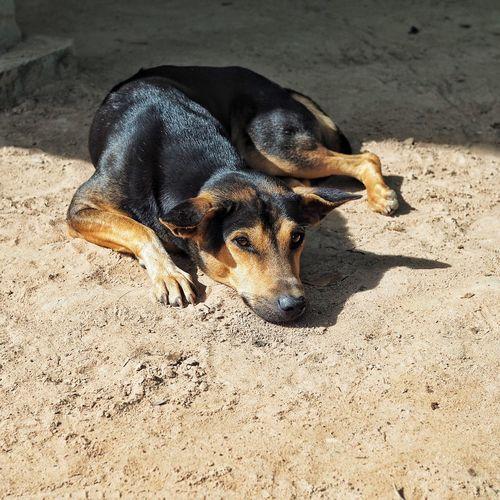 Close-up of dog on sand