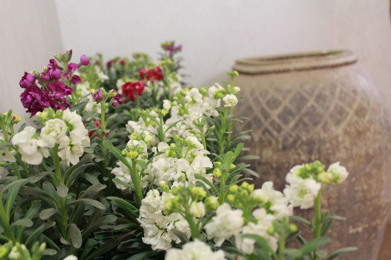 flowers and a jug Soosan Flowers Desert Life Desert Look Flower Indoors  Jug Lilium Flower Plant