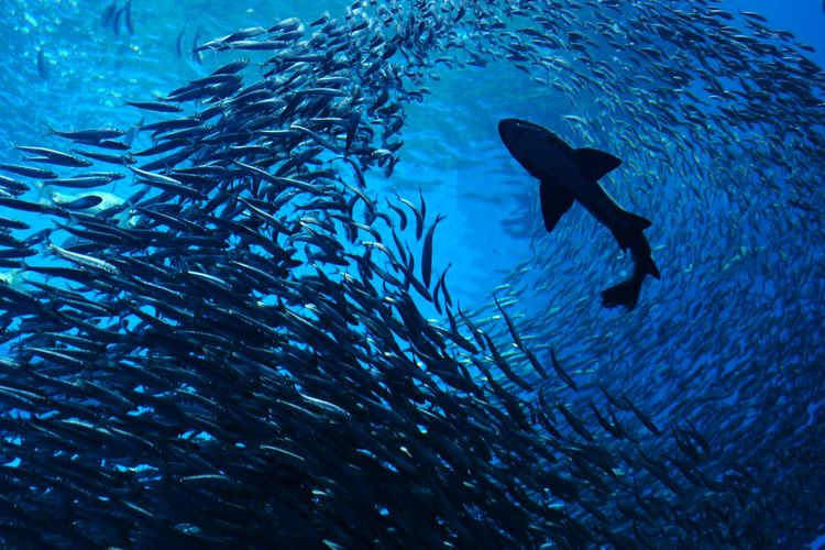 Low Angle View Of Fish Swimming In Sea