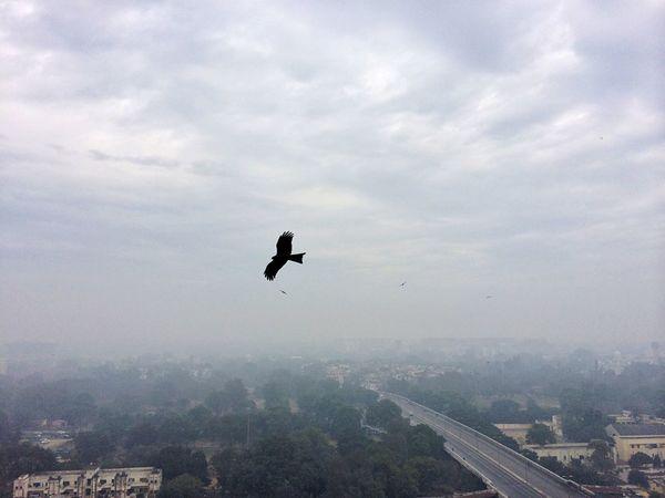 India Delhi New Delhi Hawk Beautiful Today's Hot Look