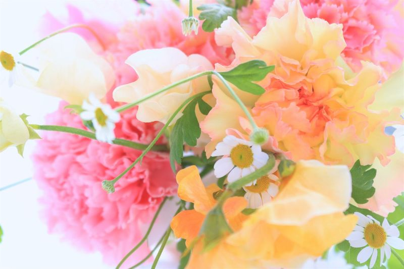 Sunlight Beauty In Nature Close-up Day Flower Flower Arangement Flower Head Fragility Freshness Growth Nature No People Outdoors Petal Pink Color Pink Flowers Plant Yellow Color Yellow Flowers