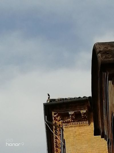 Bird Perching Roof Sky Animal Themes Architecture Building Exterior Built Structure