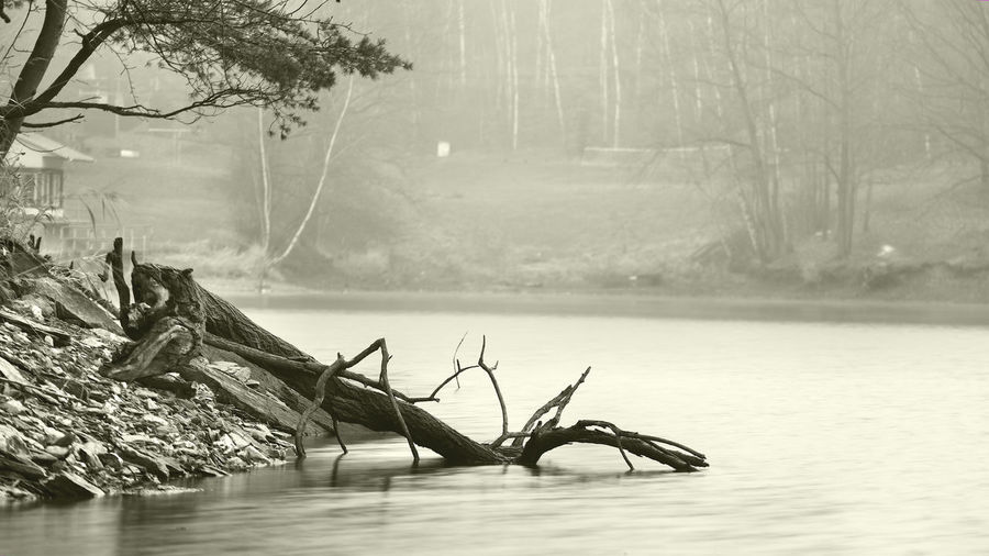 Beauty In Nature Blackandwhite Day Growth Idyllic Lake Lakeshore Landscape Melancholic Landscapes Minimalism Monochrome Nature No People Non-urban Scene Outdoors Plant Remote Scenics Sky Tranquil Scene Tranquility Tree Water Weather