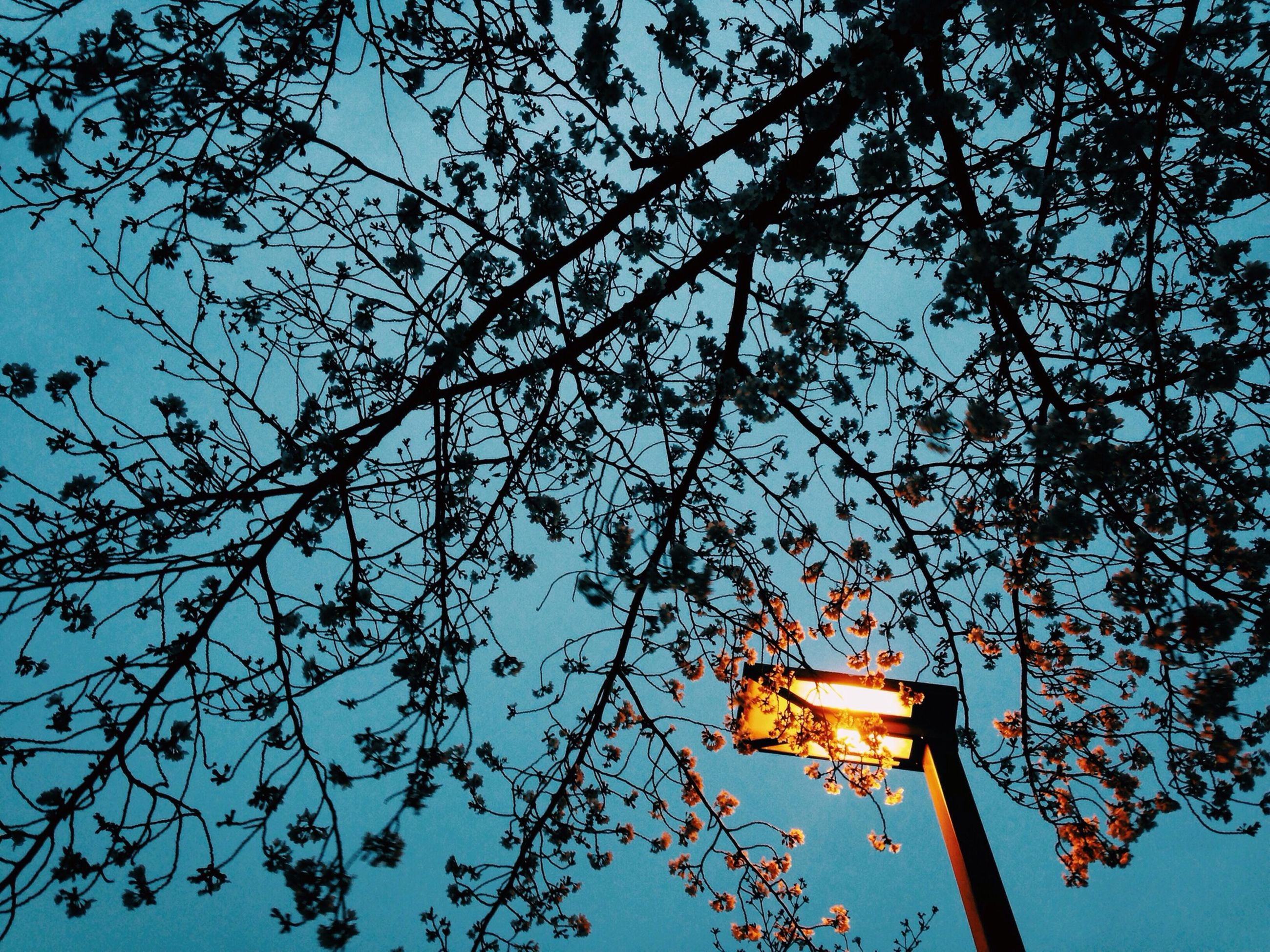 low angle view, tree, built structure, architecture, sky, lighting equipment, clear sky, street light, branch, building exterior, illuminated, blue, silhouette, outdoors, dusk, no people, day, nature, electricity, sunlight