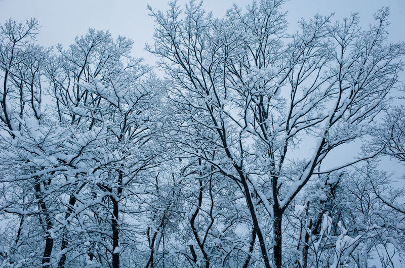 Low angle view of snow covered bare trees against sky