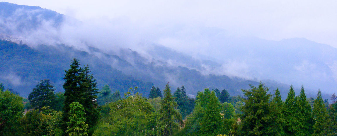 Morning rolls in A Cool Start Beauty In Nature Beyond The Trees, Blue Hills Burning Off Cloud Cloudy Concealed Houses Concealed Sky Fake Fire Fir Trees Hidden Beauty Hidden Distance Hidden Heights Homes In The Mist Landscape Misty Dawn Misty Mountains  More To Come Mountain Slow Reveal Swirling Mist Tranquil Scene Tree Line Warming Up