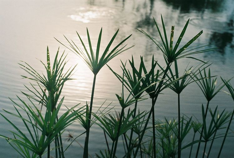 Film Sunlight Agfa Agfa Vista200 Beauty In Nature Blade Of Grass Film Photography Grass Green Color Growth Lake Leaf Nature No People Outdoors Plant Plant Part Water