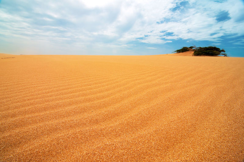 A shrub appearing from the Taroa Sand Dune in Guajira, Colombia. Beach Coast Day Desert Dry Dune Dunes Heat Hill Landscape Natural Nature Outdoors Sand Sandy Sea Seascape Sky Sunny Texture Tourism Travel Vacation Water Wilderness