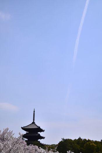 京都 仁和寺 桜