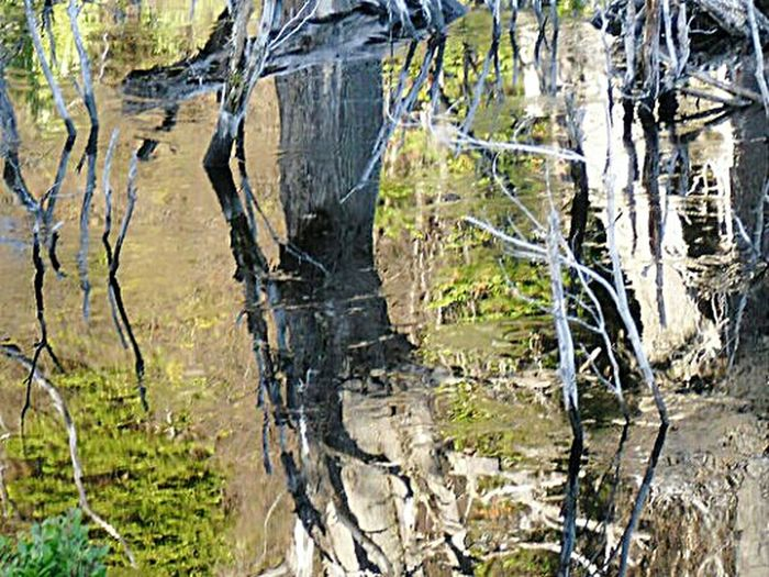 Tree Nature Water Forest No People Outdoors Tree Trunk Tranquility Tranquil Scene Beauty In Nature Tree Trunk Routa Tres Panamericana Routa 3 Argentina Travel Cold Temperature Natural Disaster Fallen Tree Reflection