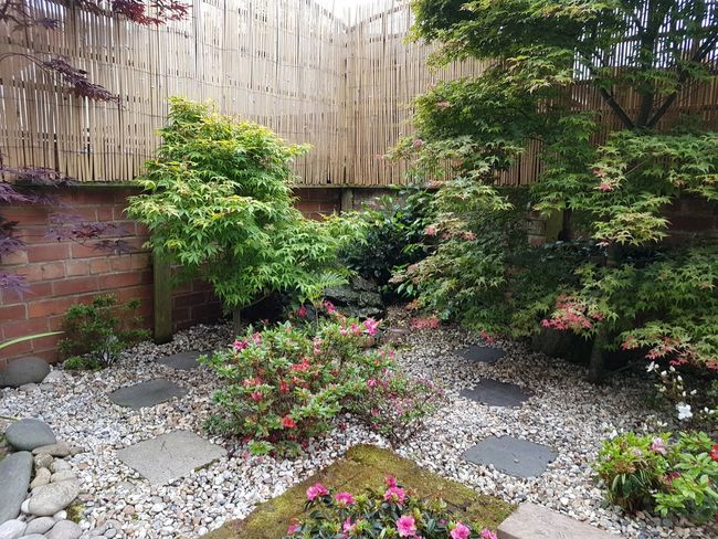 Plant Flower Grass Outdoors No People Garden Decoration Japanese Style
