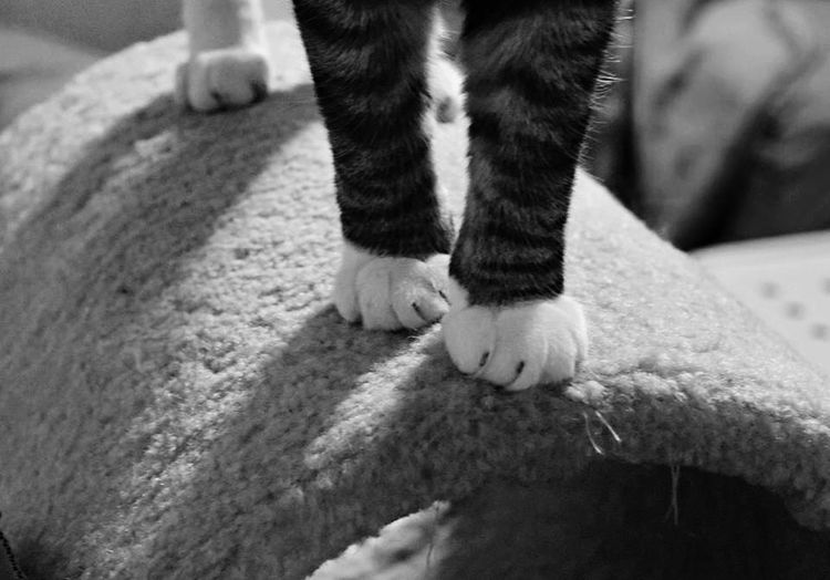 I just love the angle and shadows 💗 Cats Paws Purrfect