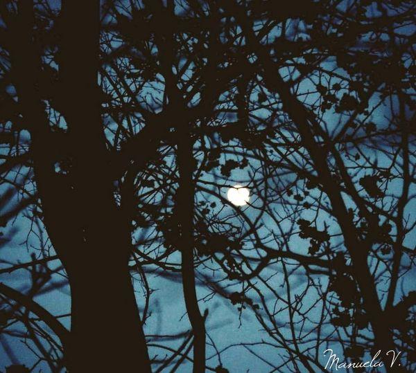 Mooonlight Moon Lovemoon MyMoon Photography Photo2018 Canonphotography Photoshoot Mypassion Photographing Tree Branch Silhouette