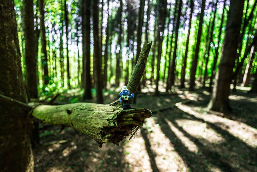 EyeEm Nature Lover Bokeh Bokeh Photography Schlumpf Portrait Nikon D750 Nikon Fisheye16mm Toys Bamboo - Plant Beauty In Nature Day Focus On Foreground Forest Forestwalk Green Color Growth Land Leisure Activity Nature Outdoors Plant Sunlight Toy Tranquil Scene Tranquility Tree Tree Trunk Trunk Wood - Material WoodLand #FREIHEITBERLIN The Great Outdoors - 2018 EyeEm Awards The Still Life Photographer - 2018 EyeEm Awards The Traveler - 2018 EyeEm Awards The Creative - 2018 EyeEm Awards