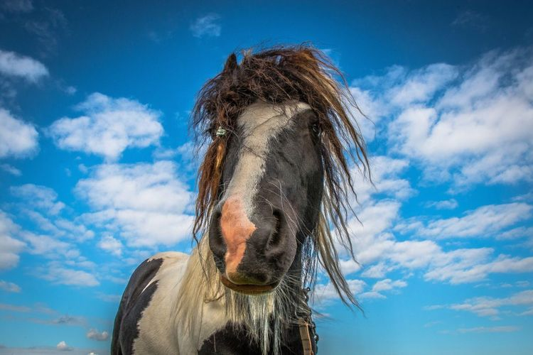 Horse Horses Horse Photography  Mane Gallop Scruffy Teathered Neh Sky Clouds Field Saddle Stallion Mare Pet Beautiful Art Photography Photo @mattnmurphy