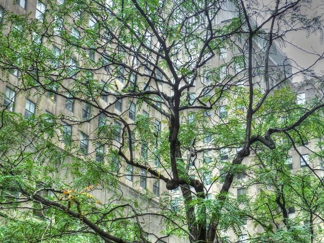HDR Collection Leaf Low Angle View Outdoors Tree Urban Landscape