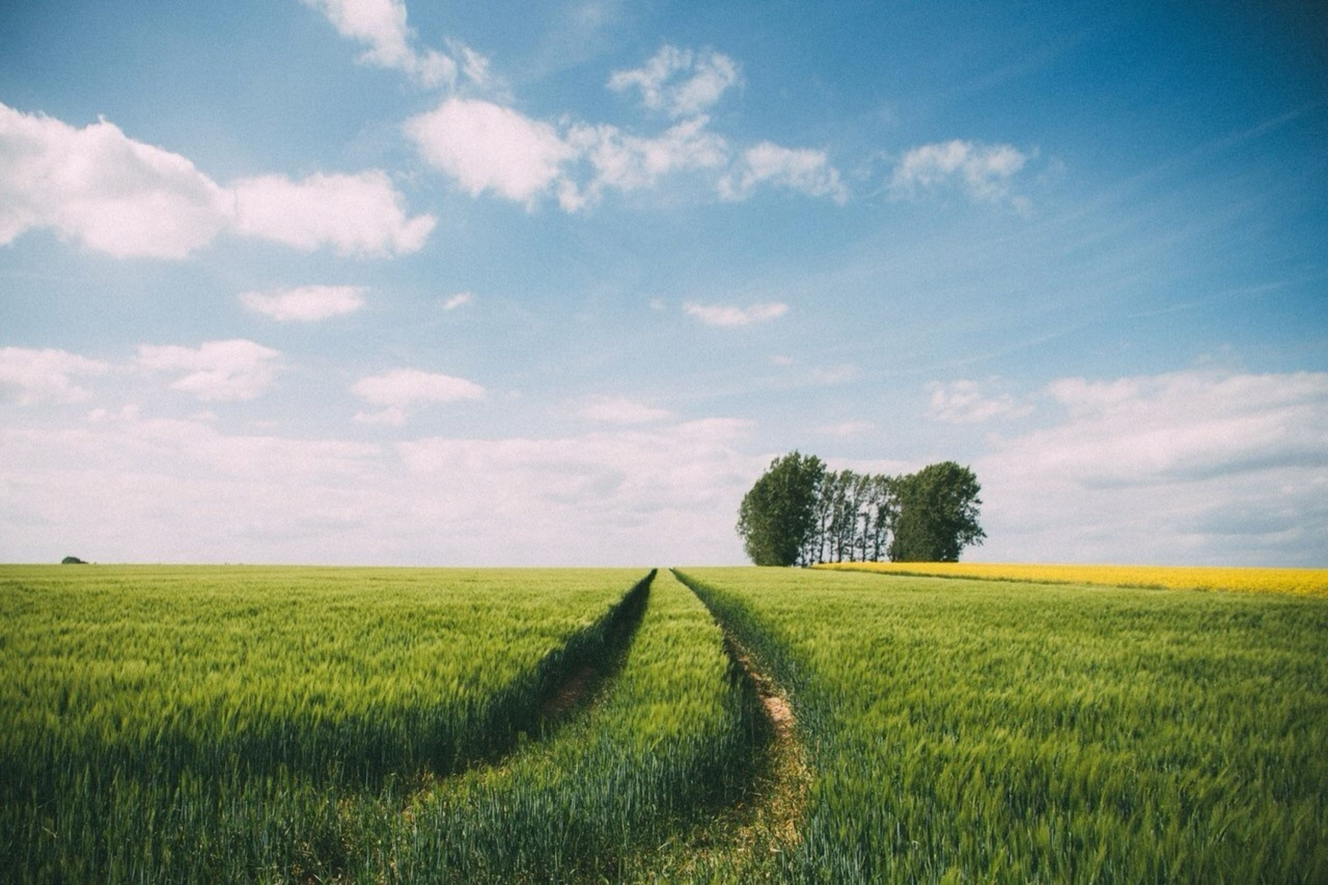 field, agriculture, rural scene, landscape, tranquil scene, sky, tranquility, farm, crop, growth, beauty in nature, nature, scenics, tree, grass, cultivated land, cloud - sky, cloud, green color, cultivated