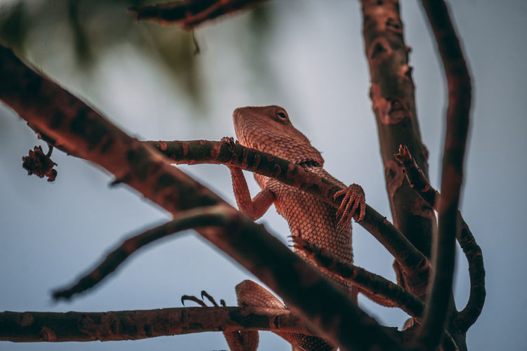 Close-up of lizard on branch against sky