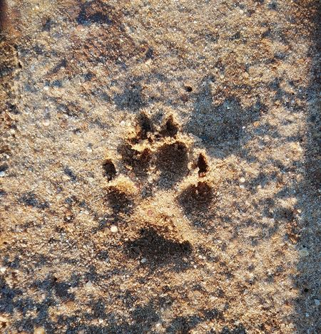 Animal Animal Themes Pataanimal Cao Dog Backgrounds Full Frame Sand Beach Textured  Pattern Close-up Animal Track