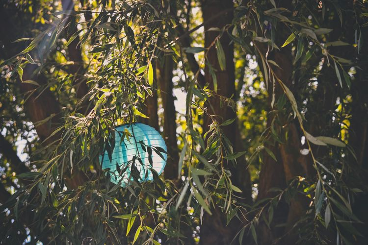 lampion Garden Home Cosy Place Cosy Wood - Material Blue Wood Lounge Chillout Summer Light Lighting Equipment Plant Part Plant Bush Lamp Lampion Growth Green Color Nature Leaf No People Plant Part Beauty In Nature Tree Sunlight Tranquility Outdoors Close-up Scenics - Nature