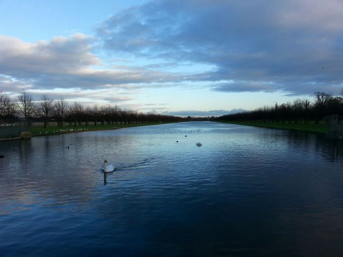 Hampton Court Palace London Animal Themes Bird Cloud - Sky England Outdoors Scenics Swan The Long Water Tranquility Uk Water