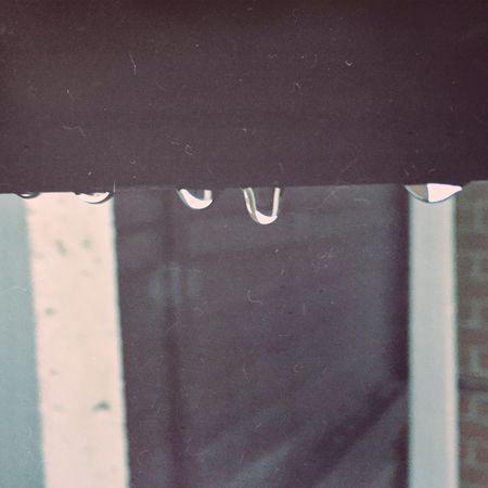 Drip drip drop, little May Showers Raindrops Garden Nature