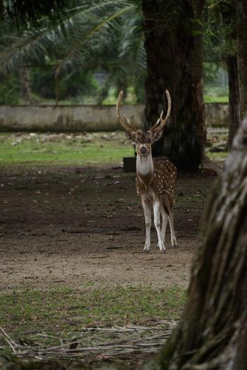 a deer in the