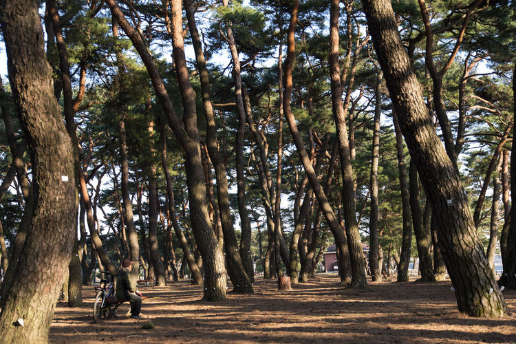 Man With Bicycle Sitting On Bench Amidst Trees At Park