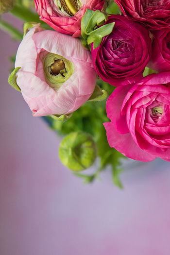 Plant Flower Flowering Plant Freshness Beauty In Nature Pink Color Close-up Rosé Vulnerability  Rose - Flower Petal Fragility Flower Head Inflorescence High Angle View No People Nature Directly Above Indoors  Flower Arrangement Bouquet Purple Bunch Of Flowers Ranunculus Blumenpracht🌺🍃