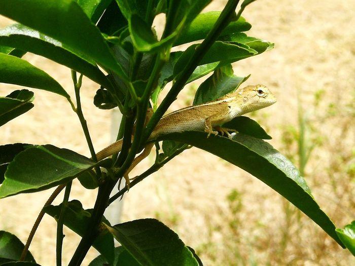 Tree Reptile
