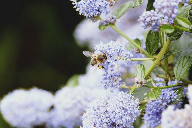 Fleurs Flowers Abeille Fleurs Abeille Bee Lac De Créteil Creteil Nature Wild Violet