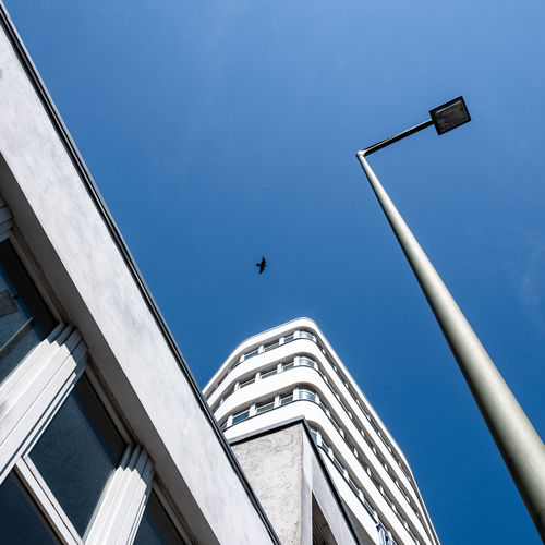 Low angle view building and bird