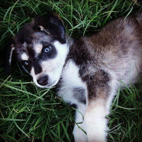 Franbuz Cute Puppy Grass