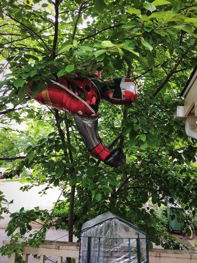 OH! NO! Power Ranger‼️😧 Woke up yesterday morning to find only half of this Power Ranger stuck in a neighbors tree! Poor bloke was dismembered...one leg missing, the other one standing upright in another neighbors yard. What tragedy has befallen our Crimson Hero...we may never know!😆 Tadaa Community Balloon Tree Hanging Red No People Green Color Day Growth Leaf Outdoors Nature Close-up Power Ranger IPhoneography