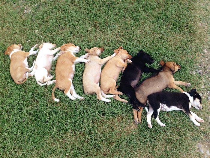 Puppy Dog Dogs