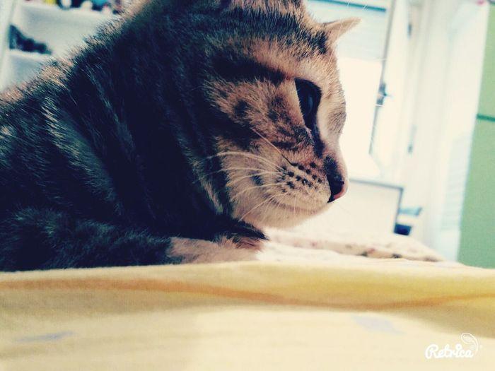 Kittycat Me Details Love ♥ Home Sweet Home Crazy Cat Venere Cat Sleeping