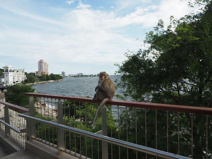 Monkey sitting on railing against sky