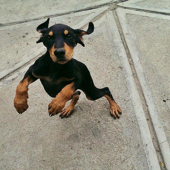 Meet Gobi ? Animals EyeEm Best Shots Enjoying Life Hello World