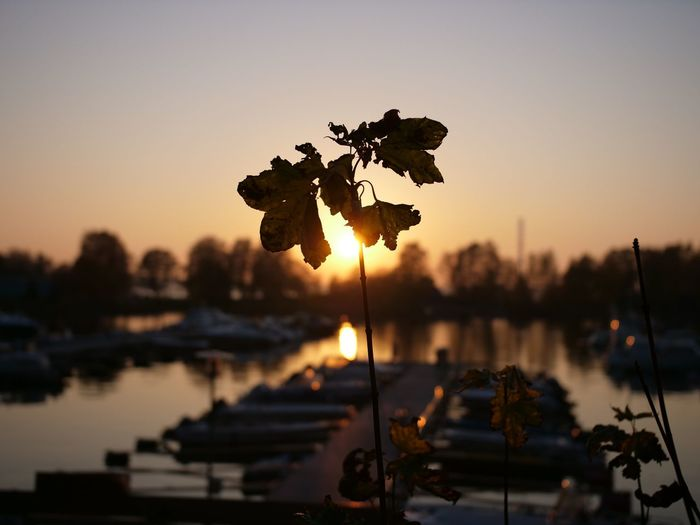 Gh5 Reflection Tranquil Scene Nautical Vessel Lake Orange Color No People Water Sunset Nature Leaf Sky Boats Silhouette Autumn Harbour Outdoors Tranquility Plant Finland Beauty In Nature Focus On Foreground Pier Marina Harbor