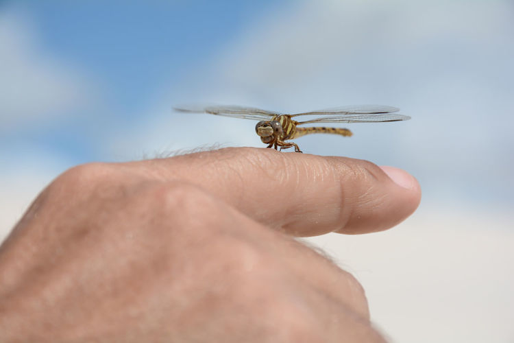 Close-up of insect on hand