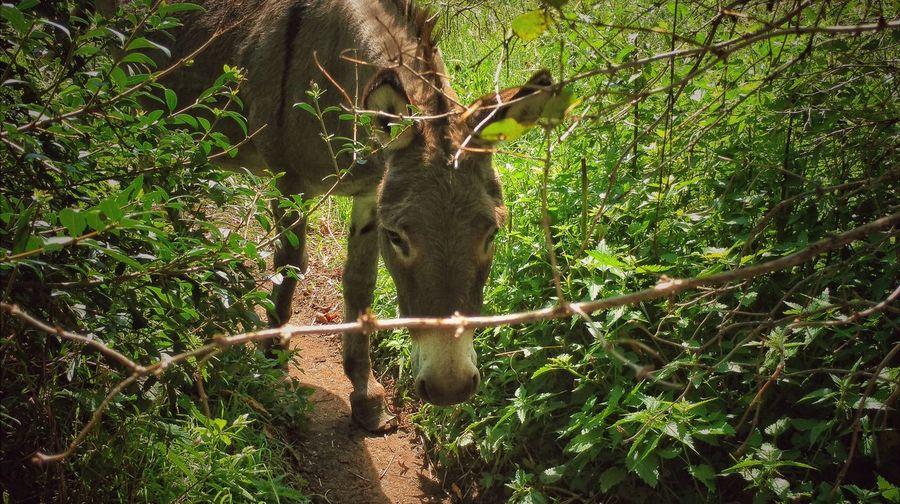 A Donkey 😊 EyeEmbestshots EyeEm Selects EyeEmBestPics Eyeemphotography Franken EyeEm Best Shots Everyday Emotion Outdoors Day Nature Beauty In Nature Donkey Photography Donkey Animals Donkeyshot Donkeys