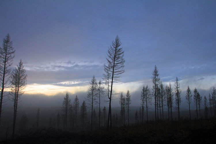 Silhouette of trees in forest during foggy weather